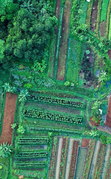 Aerial view of farmland for register now page